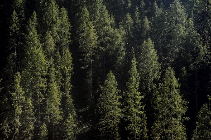 Il 5 marzo il segretario generale Fabio Renzi ad un webinar PEFC/Uncem sulla gestione sostenibile delle foreste